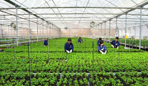 2 nữ nông nghiệp trồng trọt - Aichi